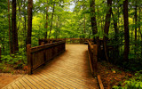 The Forest Deck by casechaser, Photography->Nature gallery