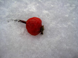 Snow Berry by djrangman, Holidays->Christmas gallery