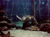 Sea Turtle by CanoeGuru, Photography->Underwater gallery