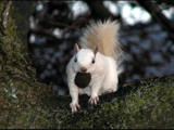 Little White Squirrel by dwdharvey, Photography->Animals gallery