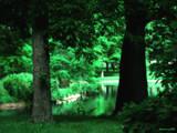Le vert est bon. by jojomercury, Photography->Landscape gallery