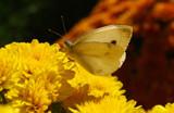 Taking a Break by jerseygurl, photography->butterflies gallery