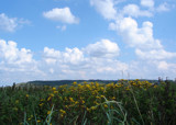 Summerday in Denmark by Pnelle, Photography->Landscape gallery