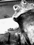 Peeking by Green_Eyed_Goddess, Photography->Sculpture gallery