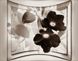 A Negative Point Of View by LynEve, Photography->Manipulation gallery