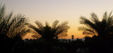 Palm Sunset by KT11109, Photography->Landscape gallery