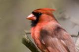 Majesty by photog024, Photography->Birds gallery