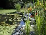 my flower garden by michelfr, Photography->Gardens gallery