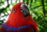 Hana by LynEve, photography->birds gallery