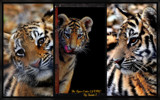 Cat Camp Collage #2 by tigger3, photography->animals gallery