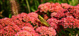 The Grasshopper, and Bee by tigger3, photography->insects/spiders gallery