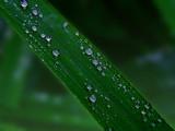 Tears from Heaven by biffobear, photography->macro gallery