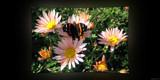 Sweet Sanctuary by Hottrockin, Photography->Butterflies gallery