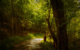 A Path At Darby by casechaser, photography->manipulation gallery