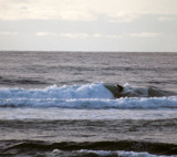 Lone Surfer Catching a Wave by verenabloo, Photography->Water gallery