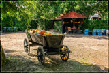 Farmyard Display by corngrowth, photography->general gallery
