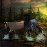 True Love by rhinebeck, photography->manipulation gallery
