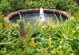 Pineapple Fountain by rhelms, Photography->Water gallery
