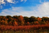 Autum In Michigan by tigger3, photography->landscape gallery