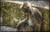 Self Portrait by Jimbobedsel, photography->animals gallery