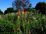 The Calendar Garden-Friday Foofy by tigger3, photography->gardens gallery