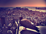 Big Apple Bird Old feel by majkl20, Photography->Manipulation gallery