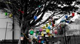 Bucket and Spade Tree by Homtail, photography->general gallery