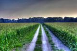 Corn Road by Mvillian, photography->landscape gallery