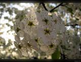 Salt 'n' Pepper by Hottrockin, Photography->Flowers gallery