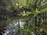 Regmar by RobNevin, photography->landscape gallery