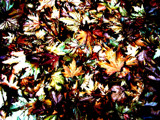 Leaves # 1 by sunnymay, Photography->Manipulation gallery