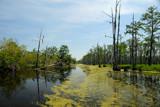 Bayou  6 by 100k_xle, Photography->Landscape gallery