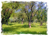 Shady Olive Grove by Papi11on, Photography->Landscape gallery