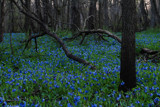 Dark Blue by wheedance, photography->nature gallery