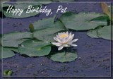 Happy Birthday, Pat by Jimbobedsel, photography->flowers gallery
