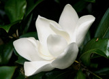 mimi's mags sideways by jeenie11, Photography->Flowers gallery