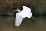egret by jeenie11, Photography->Birds gallery