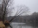 Wanna Climb a tree? by Rayn_dragon, photography->shorelines gallery