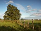 countryside tree by ekowalska, Photography->Landscape gallery