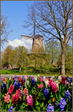 Dutch Spring by corngrowth, photography->mills gallery