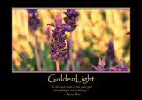 Golden Light Poster by LynEve, photography->general gallery