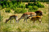 Hungry by corngrowth, photography->animals gallery