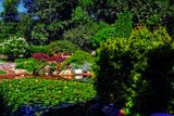Summertime At The Gardens #3 by tigger3, photography->gardens gallery