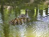A Dozen Makes Mama Busy by tigger3, Photography->Birds gallery