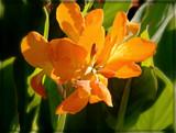 Orange Beauty by trixxie17, photography->flowers gallery