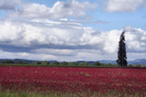 Crimson and Clover............... by verenabloo, Photography->Landscape gallery
