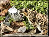Rat-A-Tat-Cat by Jimbobedsel, photography->animals gallery