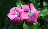 Summer Lovelies by jerseygurl, photography->flowers gallery