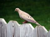 Backyard Buddies V by Hottrockin, Photography->Birds gallery