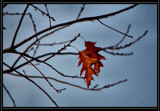 """Last Leaves """"Standing"""" by verenabloo, Photography->Nature gallery"""